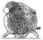 Шпицы малые и карлики(померанский) - Страница 5 JKL